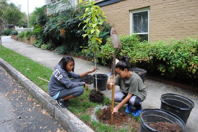 New Date for Upcoming Tree Planting